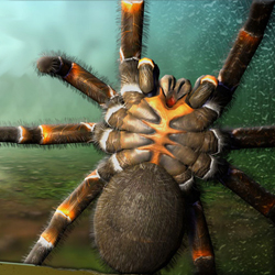 Really scary spiders